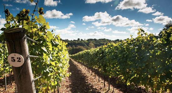 Sparkling Wine in Britain