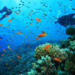 The World's Most Spectacular Places to go Diving