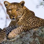 Luxury Safari Camps