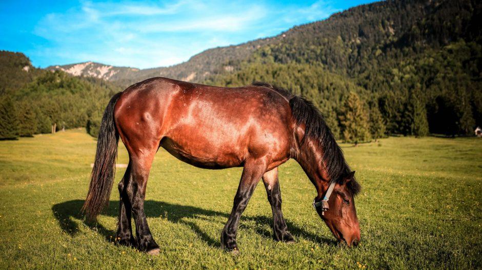 Horse grazing in English countryside near London