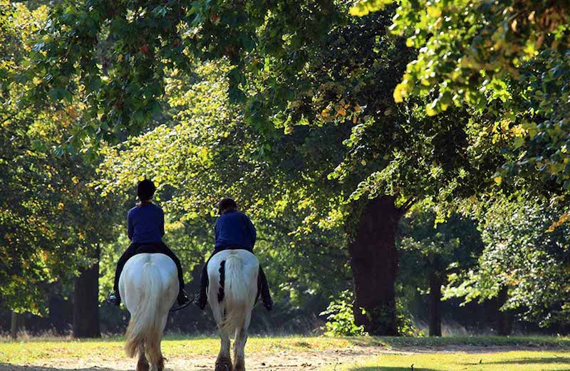 Enjoy an exciting horse ride through London's most beautiful and largest Royal Park.