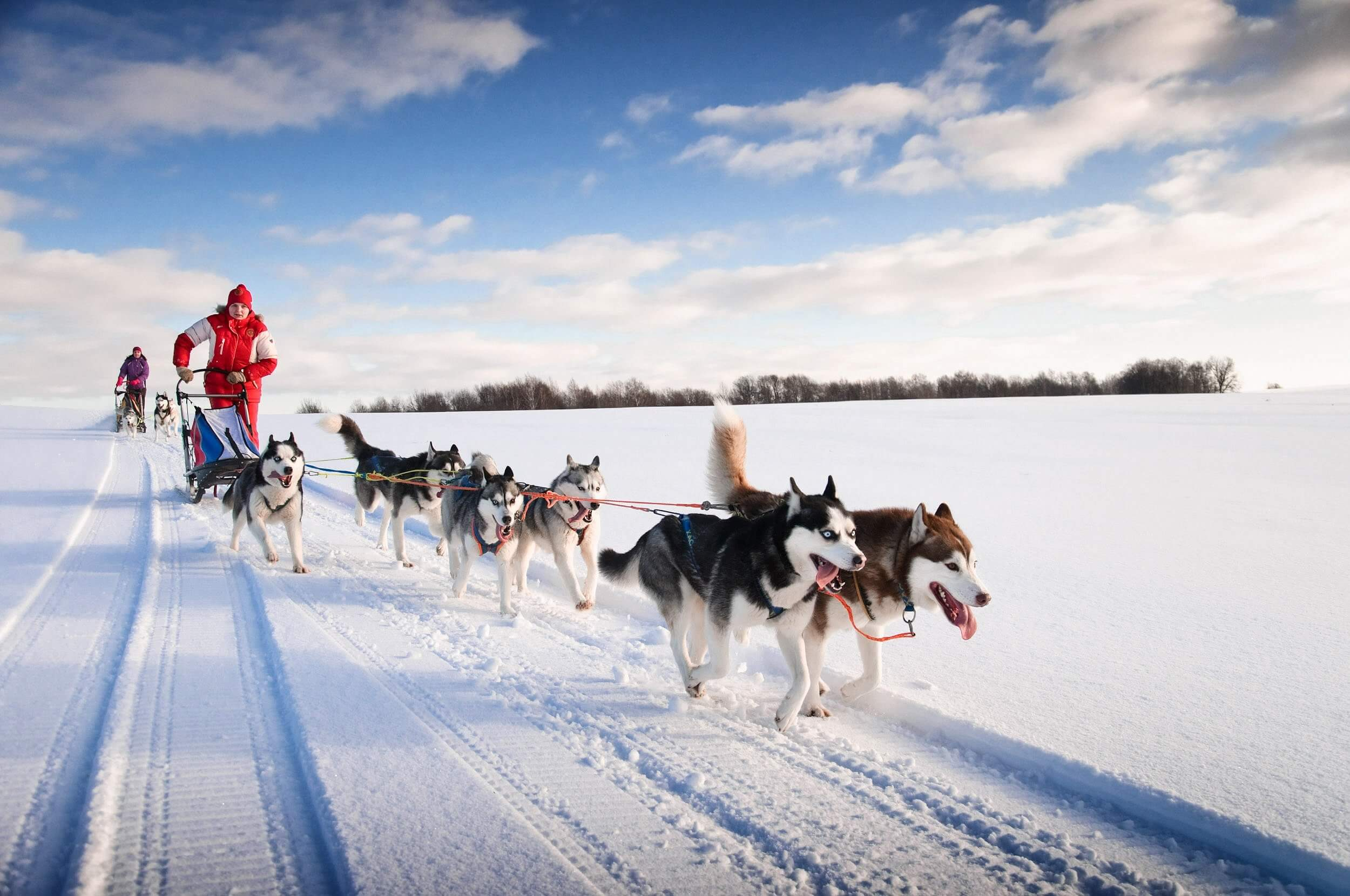 Whizz across Scotland in a husky dog sled