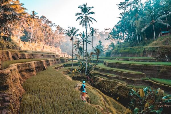 Traveler in ricefields Indonesia