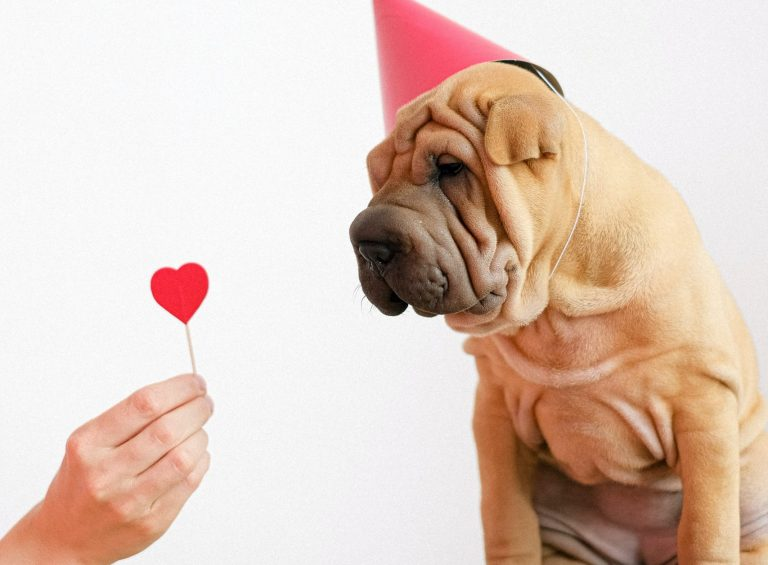 Celebrating Valentines Day with your dog