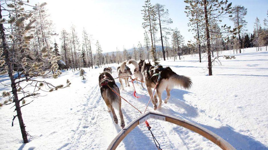 Husky safari in the Arctic