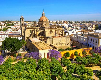 The Cathedral of San Salvador with Blossoming Jacaranda Trees, Jerez de la Frontera, Cadiz Province, Andalusia, Spain