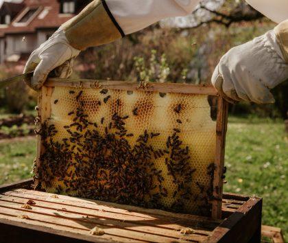 Bee keeper showing bee hive