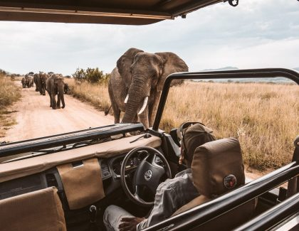 Seeing elephants on game drive