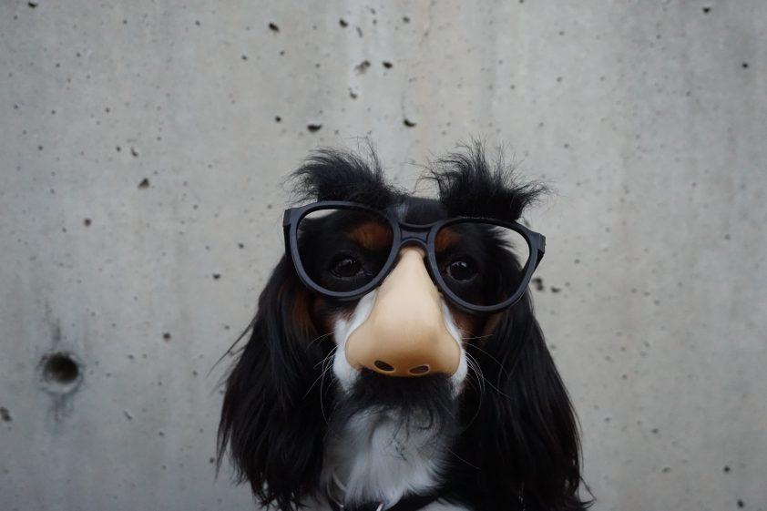 Dog wearing funny nose mask