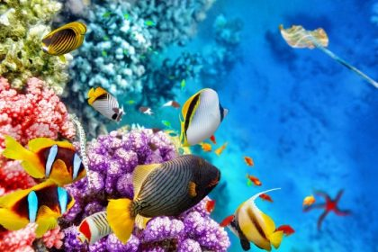 Coral and fish of Great Barrier Reef