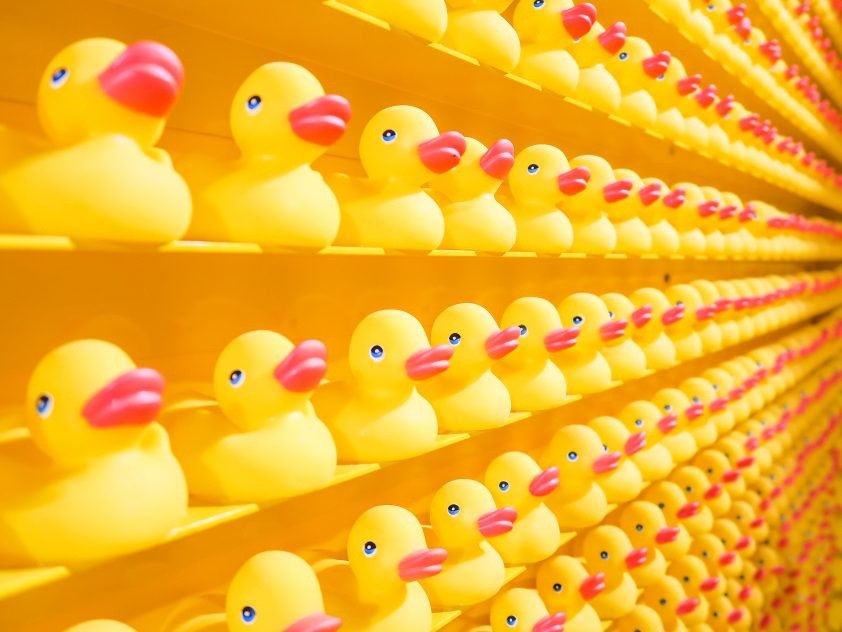 Bright yellow rubber duckies
