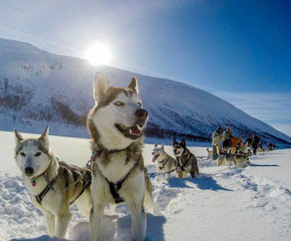 Husky Sledding adventure