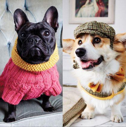 Bespoke Doggie Coats from LoveMyDog