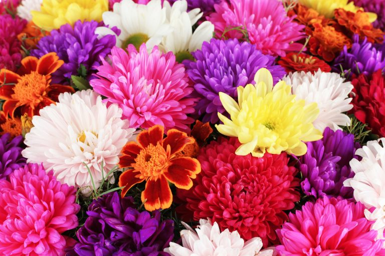 Beautiful bouquet of chrysanthemums, the November birth flower
