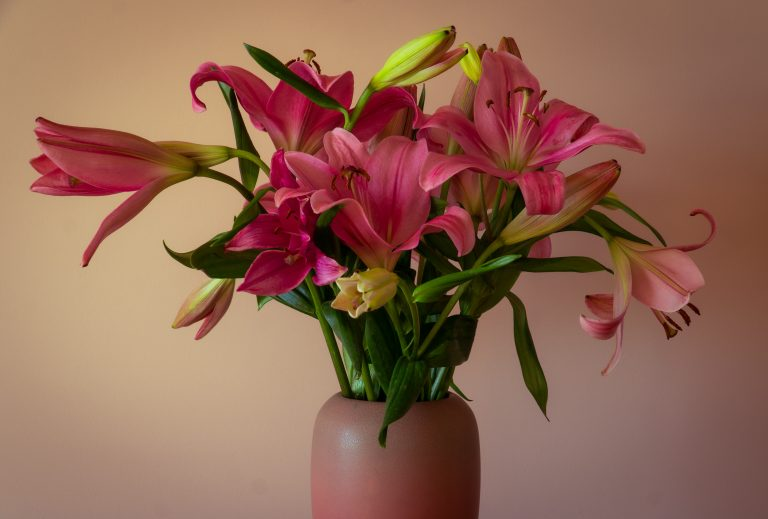 Vase of pink Asiatic lilies