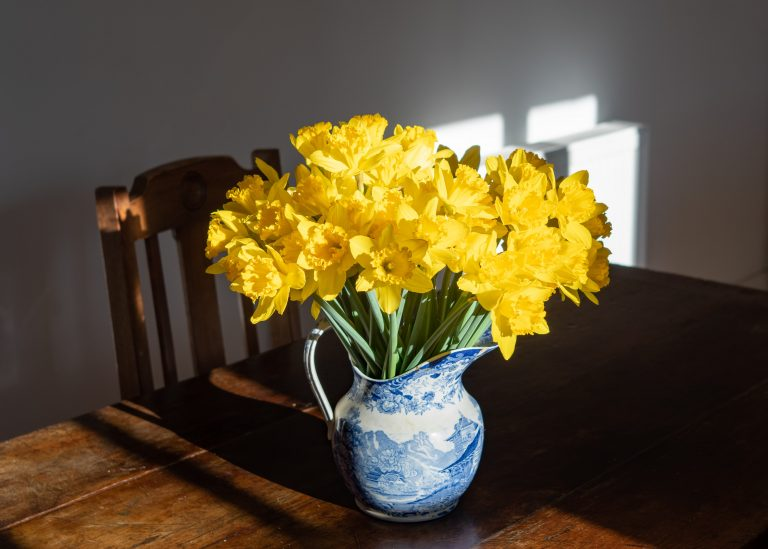 Vase of yellow daffodils on a wooden table