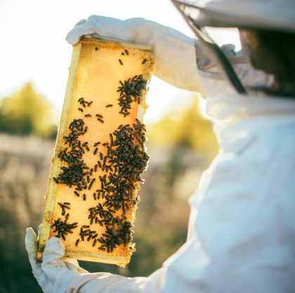 Man in bee keeping suit holding bee hive