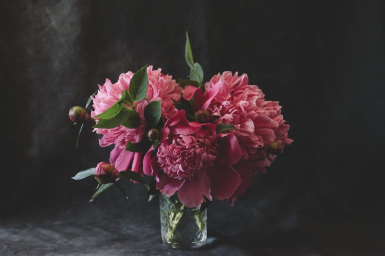 pink peonies in a glass filled with water