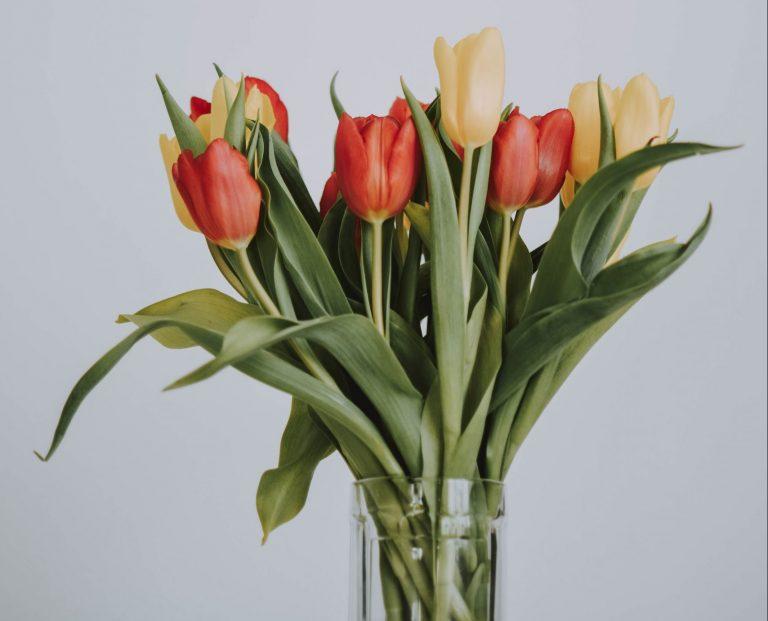 Vase of orange and yellow tulips as decor