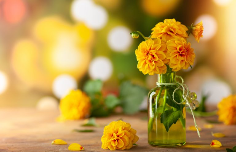 Autumn floral bouquet made of fresh yellow dahlia in green vase.