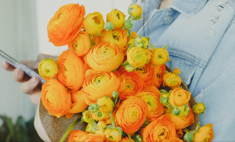 Ranunculus Cloni Dark Orange flowers