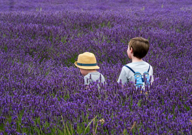 two children in a field full of lavender blossoms