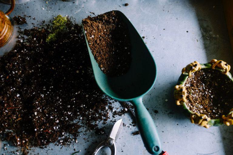 Preparing the soil to plant carnation flowers