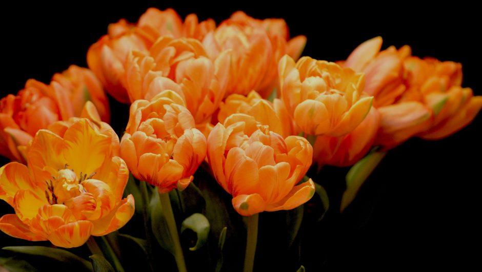 a bunch of orange flowers