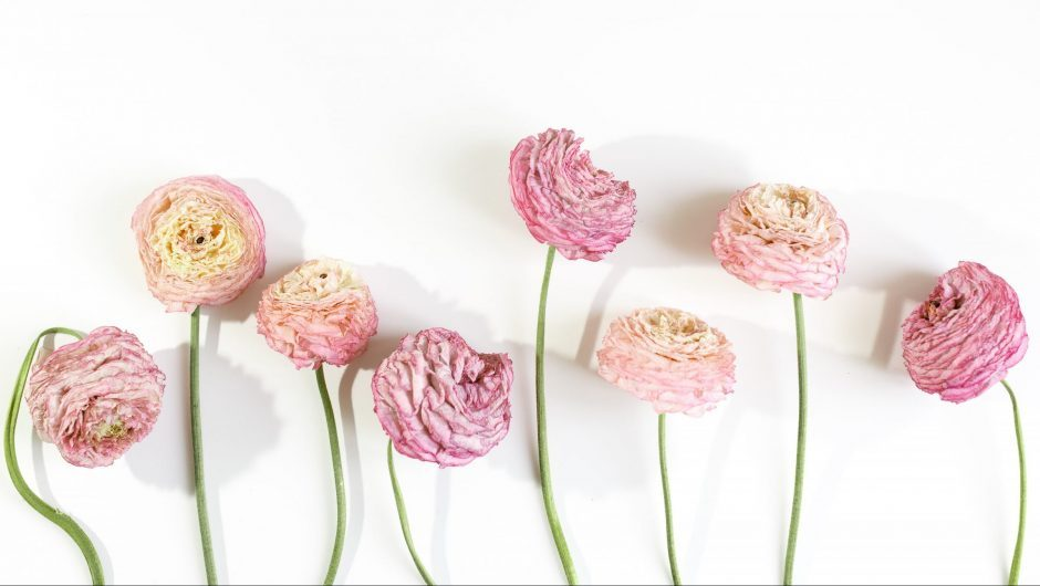 Types of Ranunculus flowers