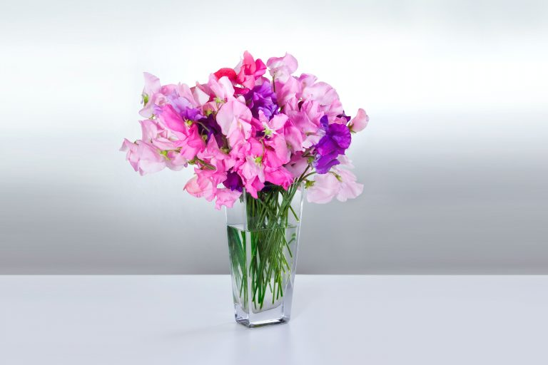 Vase of pink and purple sweet peas