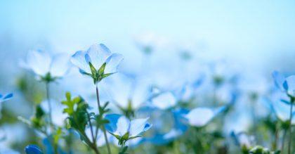 List of Blue Flowers