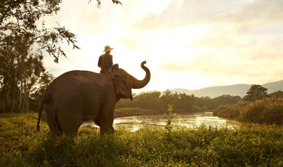 Elephant Adventure: Anantara Golden Triangle Resort and Elephant Experiences for Two
