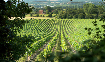 Cheers to Chapel Down: Weekend Break for Two with Behind-the-Scenes Winery Tour