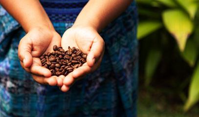 The Coffee Lover's Holiday: Costa Rican Coffee Plantation Getaway for Two