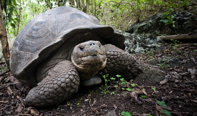 Darwin's Enchanted Isles: Exclusive Escape for Two to the Galápagos