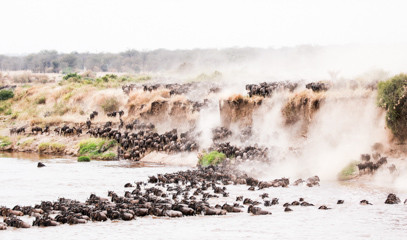 Serengeti Splendour: East African Migration And Safari For Two