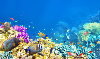 Coral Kingdom: Diving and Spearfishing for Two on the Great Barrier Reef