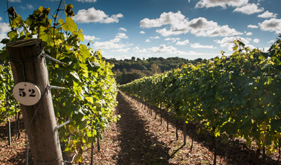 Bespoke Bubbly: Create Your Own English Sparkling Wine & Private Tour at Hambledon Vineyard