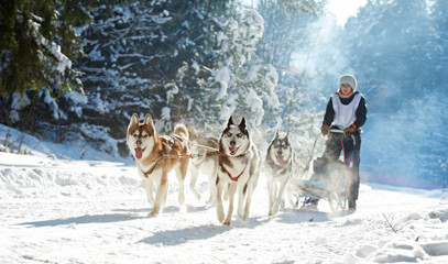 Take The Reins Captain A Husky Dog Sled In An Overnight Adventure For Two