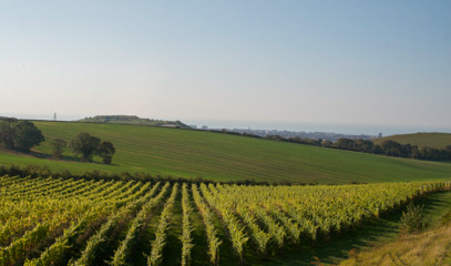 Natural by Nature: Vineyard Tour with Wine Tasting and Lunch For Two At Terlingham Vineyard