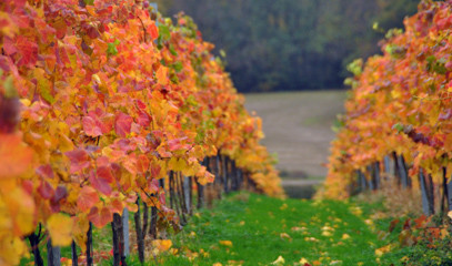 Britain Does Bubbles: Wine Tour & Tasting For Two At Woodchurch Wine Estate