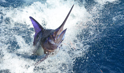 Prize Catch: Big Game Fishing Break for Two
