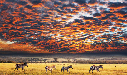 Safari Holiday: Cape Town & Kariega Game Reserve for Two