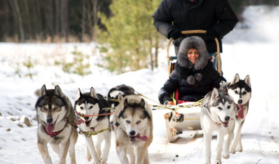 Call Of The Wild: Full Hands-On Mushing Experience For Two With Huskyhaven