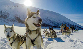 Born To Run: Twilight Experience For Two With Huskyhaven