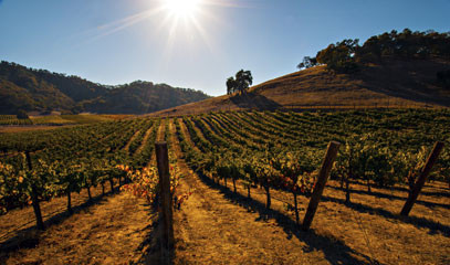 Bay Area Adventure: Two Night Wine Getaway in Sonoma County
