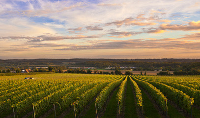 The New Champagne: Private Group English Sparkling Wine Tour for up to 15 People in Surrey Hills