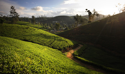 The Golden Valley of Tea: Sri Lankan Getaway for Two with The Ceylon Tea Trails